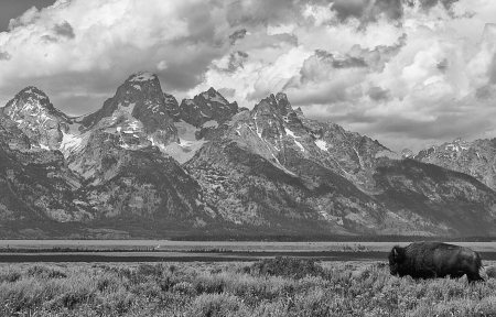 BuffTeton (1 of 1)