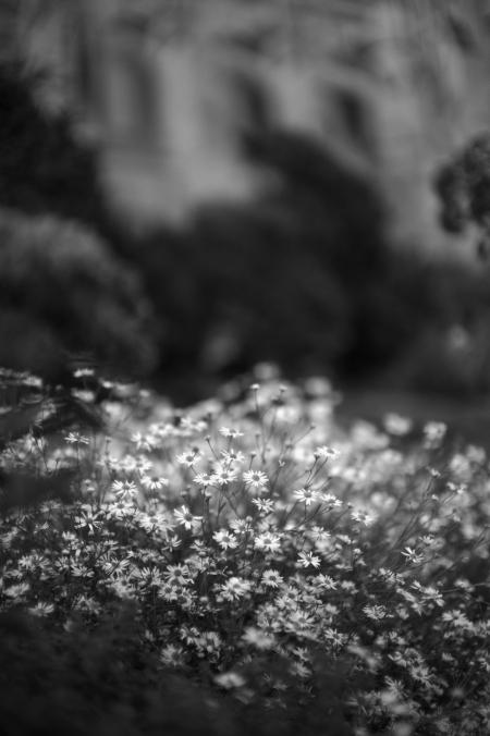 Flowers In Monochrome