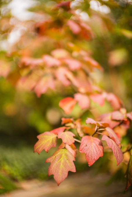 High Autumn