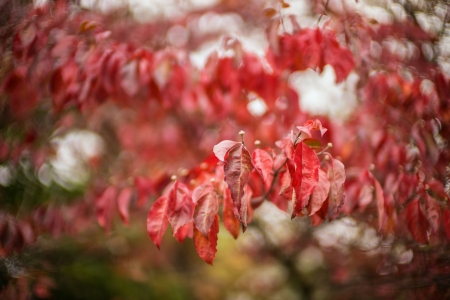October Leaves 2932 NM2