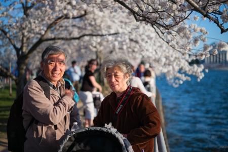 CherryBlossom2014c