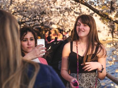 CherryBlossom2014h