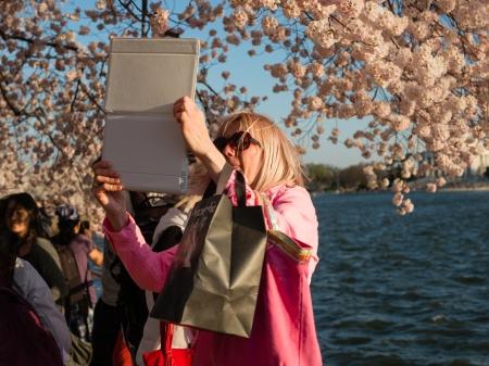CherryBlossom2014j