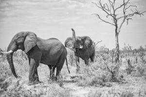 TF Elephant Trunk