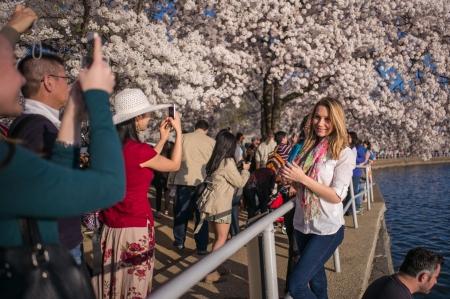 Blossoms 2015d