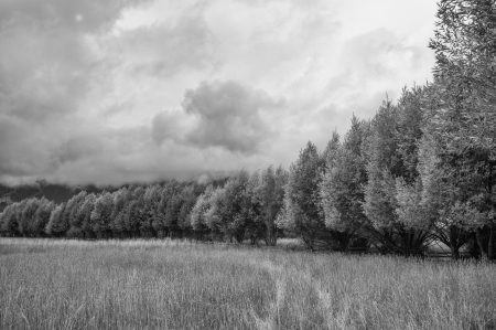 Wenzel Trees 2