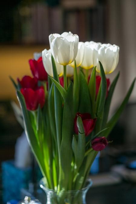 2016 Tulips 3