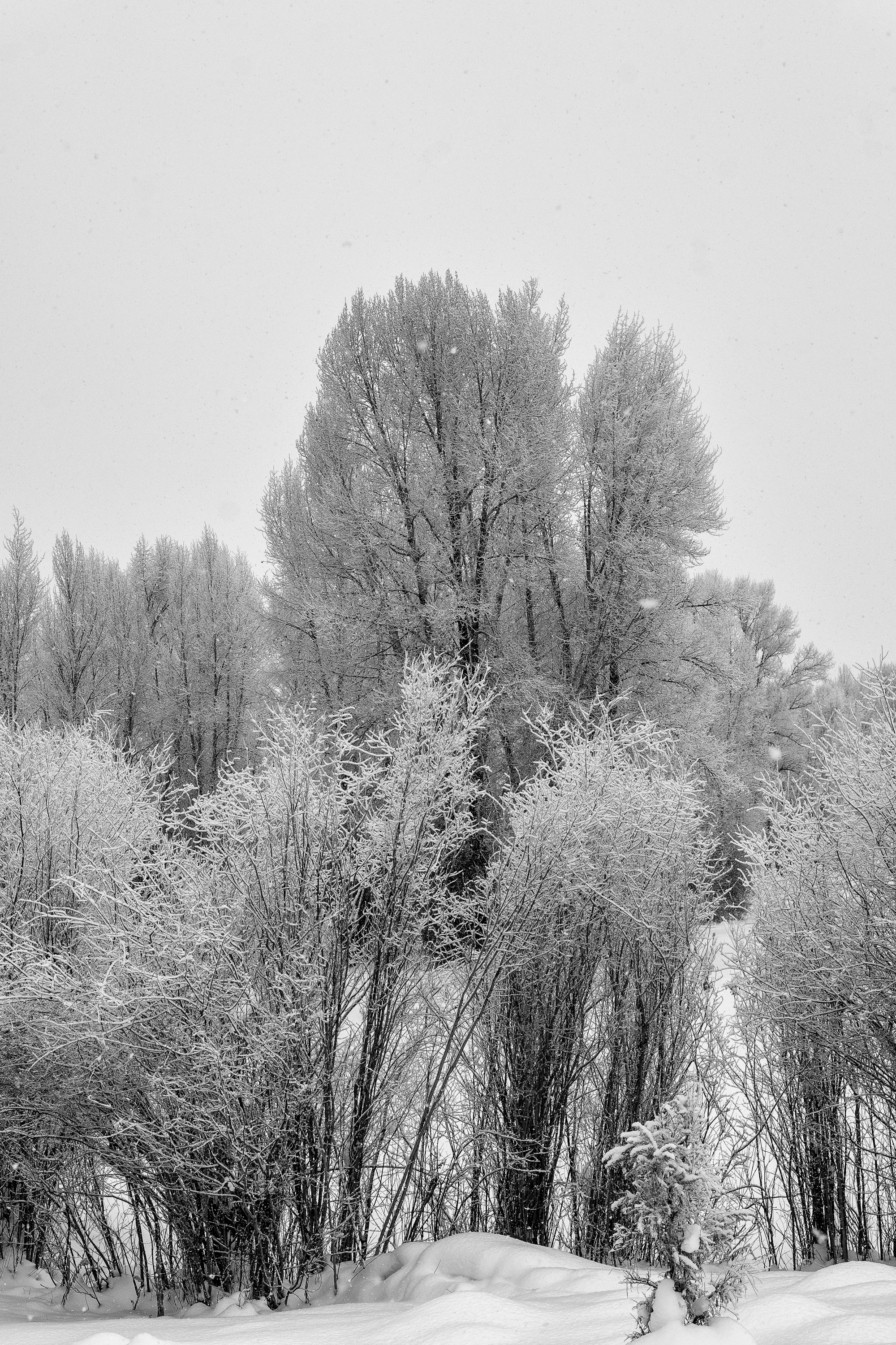 new-years-day-2017-snow-5