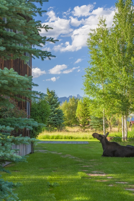 Moose Story-11