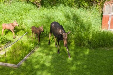 Moose Story-13