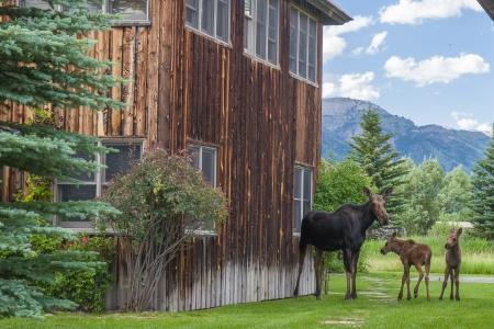 Moose Story-14