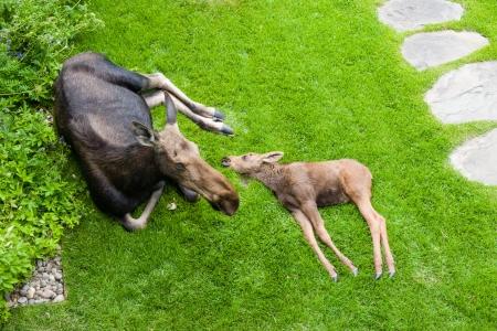 Moose Story-3