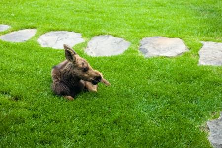 Moose Story-6