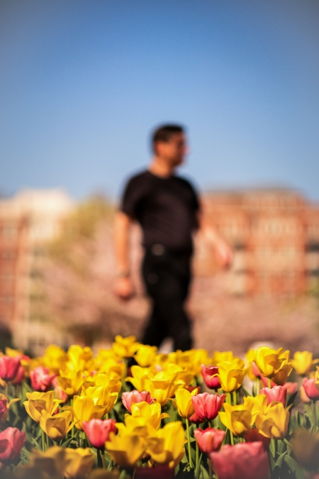 Tulip Frenzy 18-10