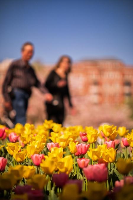 Tulip Frenzy 18-3
